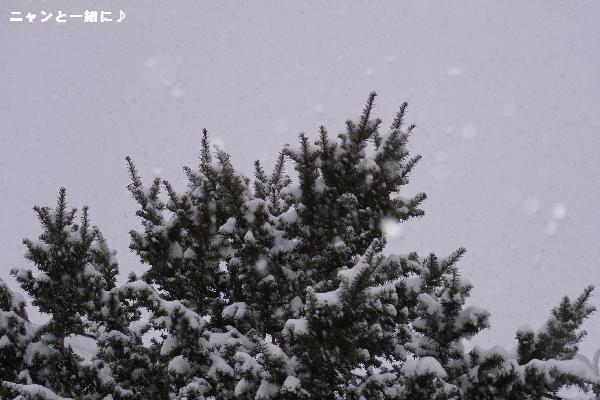127雪木
