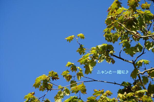 aozora914.jpg