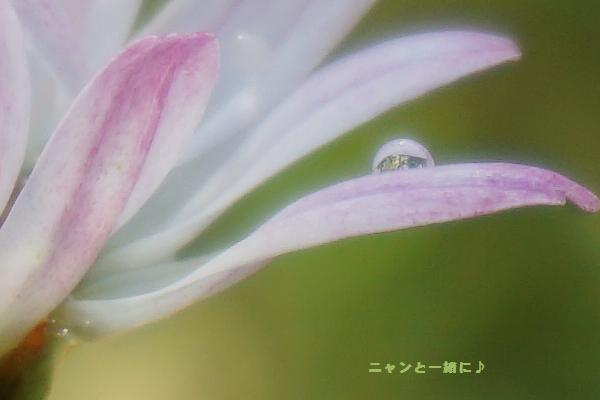 hanasizuku903.jpg