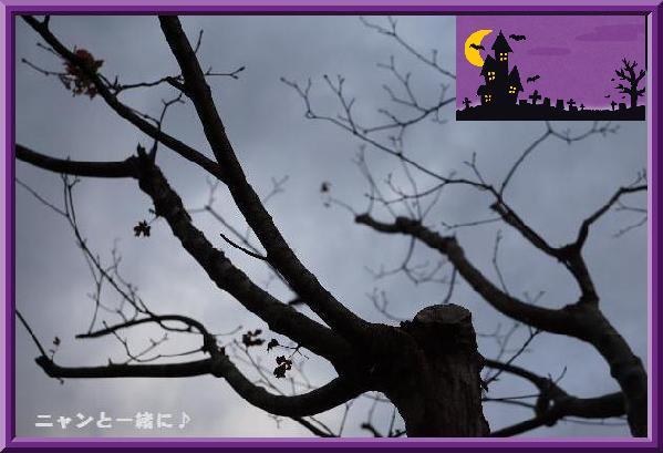 harowhinki.jpg