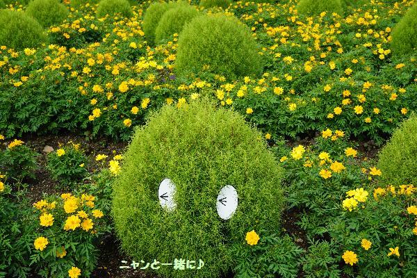 kokiakibana.jpg