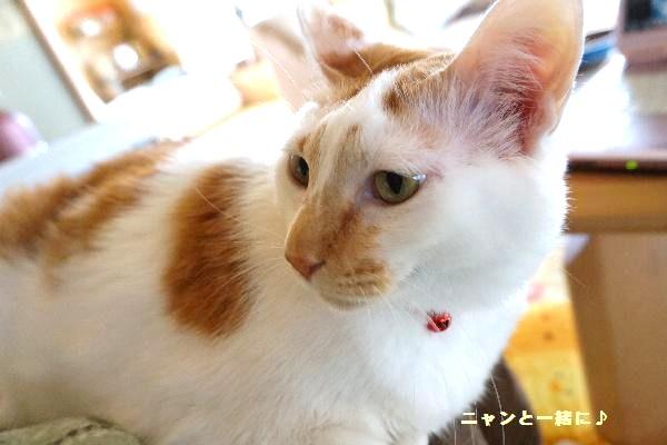 komonori115.jpg