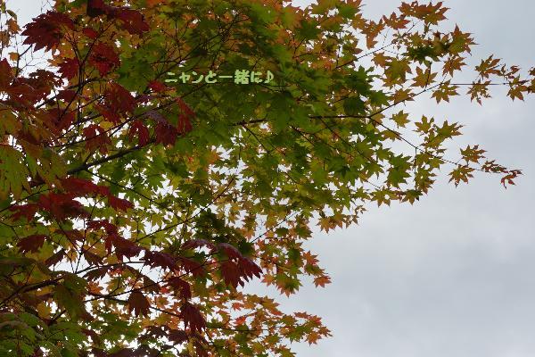 momijiiro9615.jpg