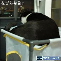 dai20151002_banner.jpg