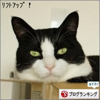 dai20151006_banner.jpg