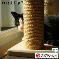 dai20151015_banner.jpg