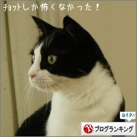 dai20151016_banner.jpg