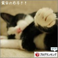dai20151019_banner.jpg