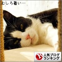 dai20151105_banner.jpg
