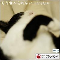 dai20151111_banner.jpg