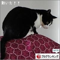 dai20151118_banner.jpg