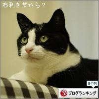dai20151119_banner.jpg