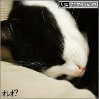 dai20151125_banner.jpg