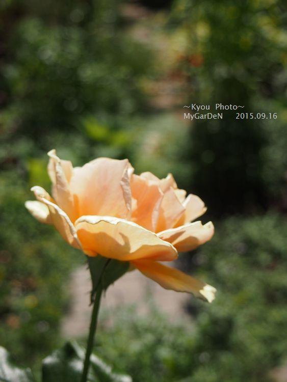 P9163447.jpg