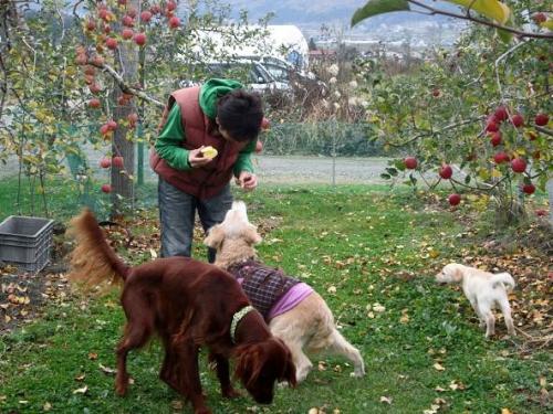 賑やかなリンゴ畑12