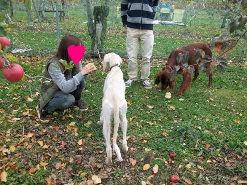 賑やかなリンゴ畑9