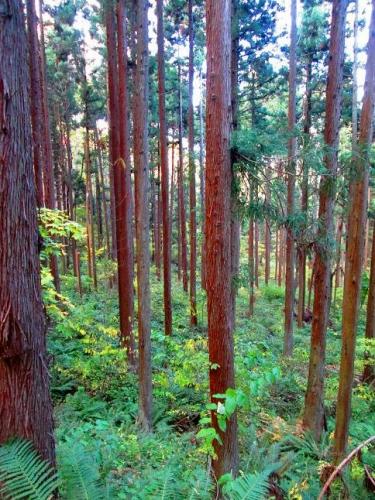森に呼ばれて5