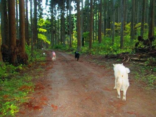 森に呼ばれて6