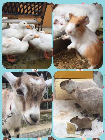 白鳥動物園