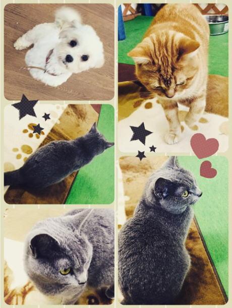 生駒山上遊園地内にあるペットふれあいの森のワンちゃん、ネコちゃん♡