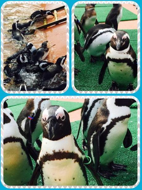 神埼農村公園ヨーデルの森 ペンギン