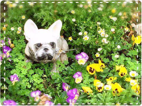 とある団地のお庭の一角 犬とお花畑