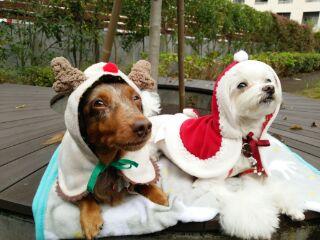 トリルくりむクリスマス