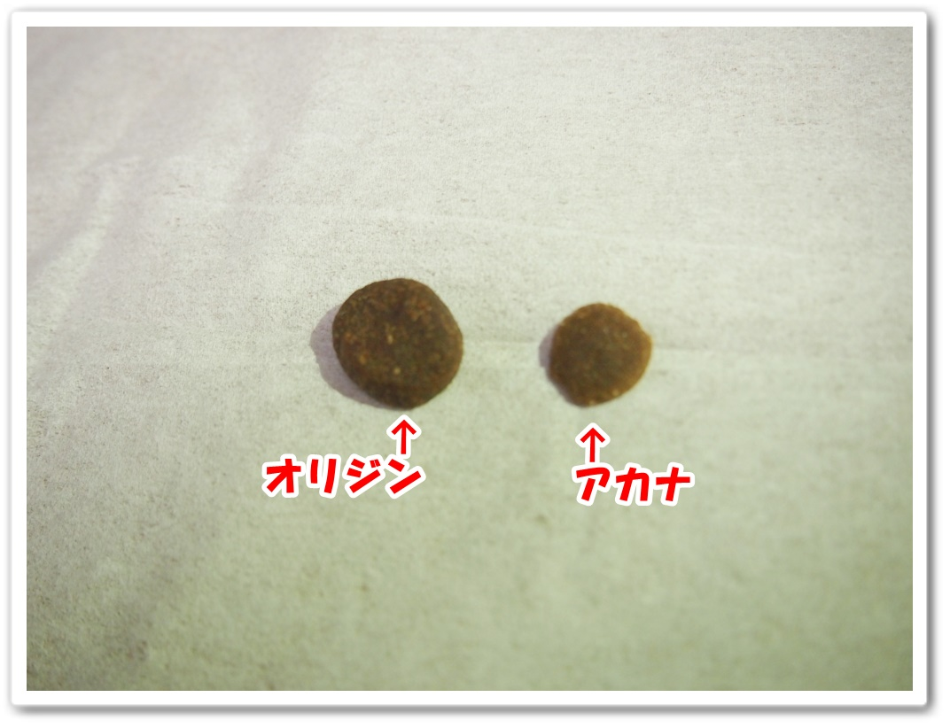 P1011704.jpg