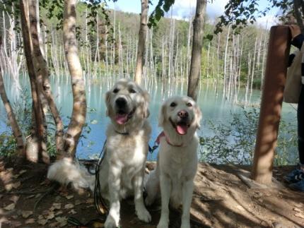 2015_09_15青い池と白い犬