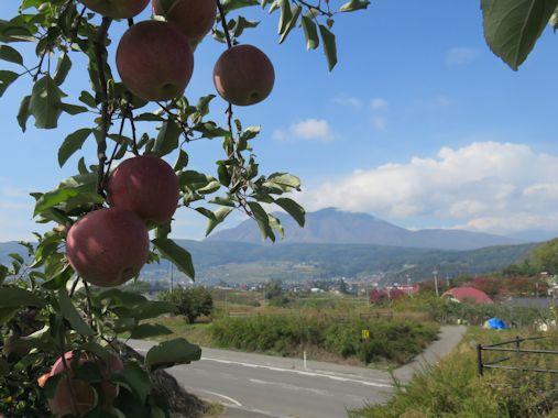 リンゴの町