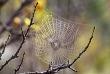 Dhp347蜘蛛の網