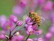 Dhp49花と蜜蜂