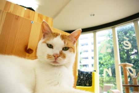 猫部屋 043
