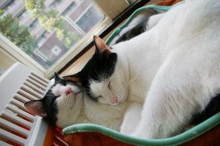 猫部屋 026