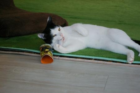 猫部屋おもちゃで遊ぶ 033