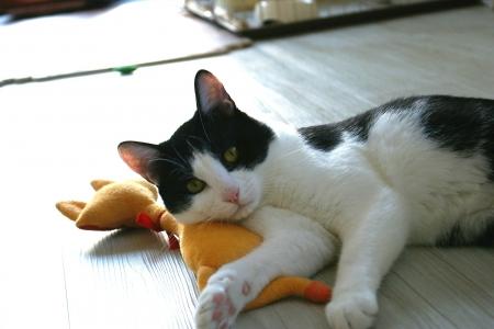 猫部屋おもちゃで遊ぶ 037