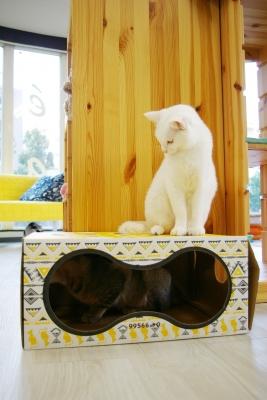 猫部屋おもちゃで遊ぶ 004