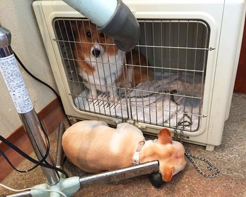 犬かぶりもの のなかの寒さ対策