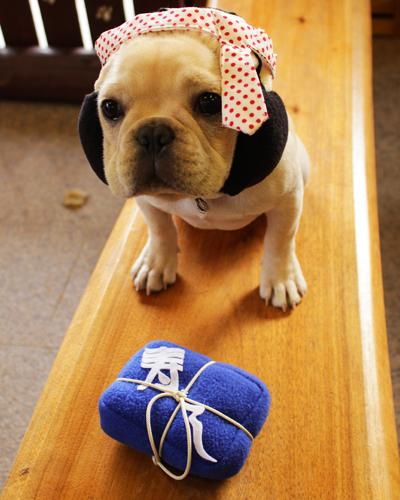 犬ヅラ おもちゃ