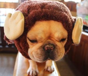 犬のかぶりもの 干支申 犬ヅラ