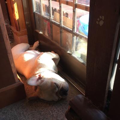 かぶりもの犬の昼寝