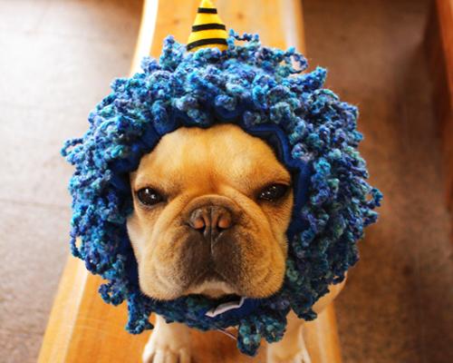ネックウォ-マ-にもなる犬ヅラ