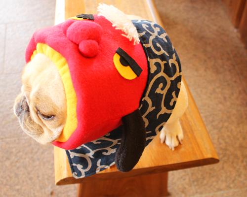 秋祭りにも犬ヅラ