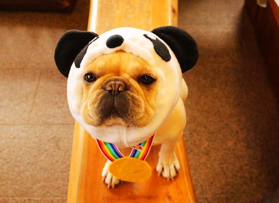 金メダルパンダ犬ヅラ オリンピック