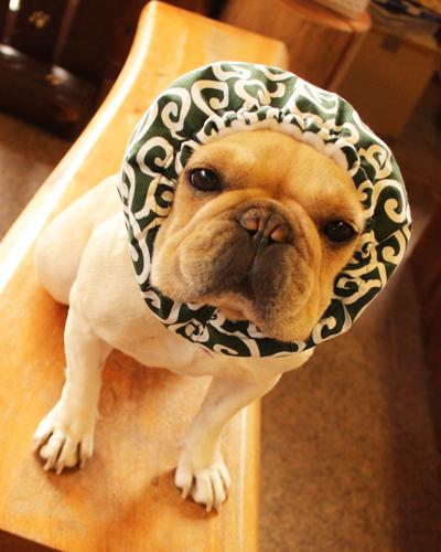 ハンドメイド 犬かぶりもの 犬ヅラ