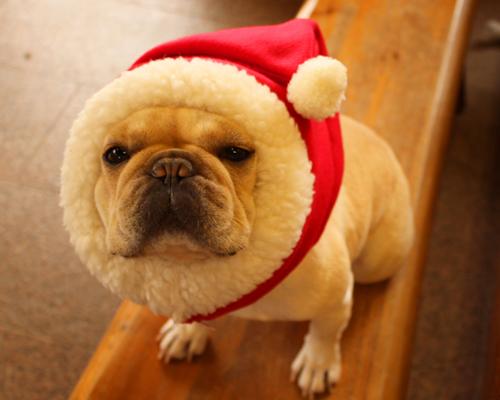 クリスマス 犬ヅラ