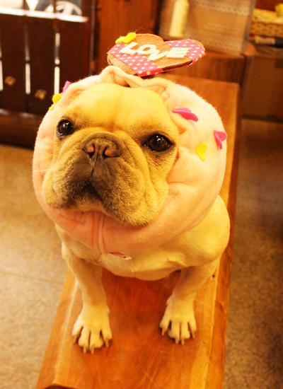 LOVEチョコ犬ヅラ