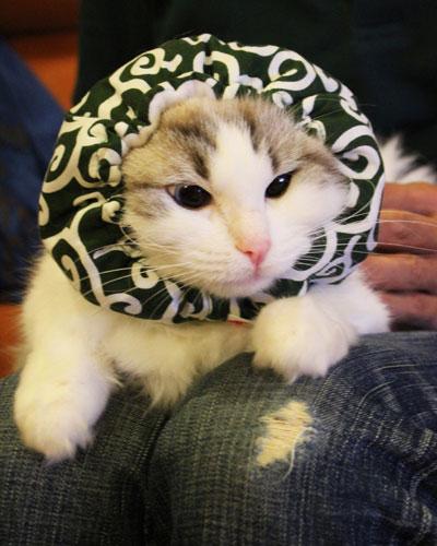 猫 かぶり物