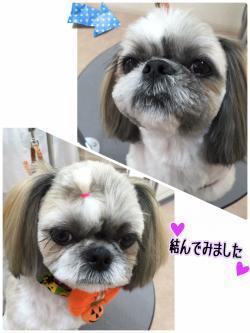 プルー君_convert_20151010211826