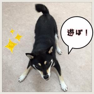 うるまちゃん_convert_20151018225827